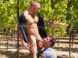 Job d etudiant il suce un gay dans les champs